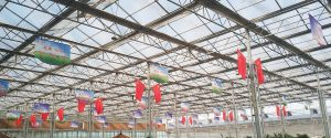 8mm twin wall polycarbonate sheet greenhouse
