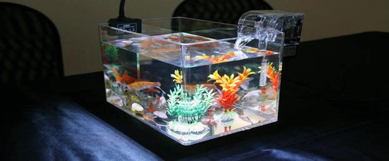 Plexiglass Fish tank